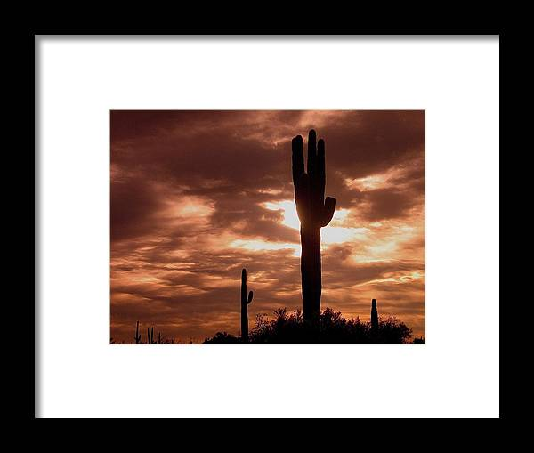 Film Homage Orson Welles Saguaro Cacti The Other Side Of The Wind Carefree Arizona 2004 Framed Print featuring the photograph Film Homage Orson Welles Saguaro Cacti The Other Side Of The Wind Carefree Arizona 2004 by David Lee Guss