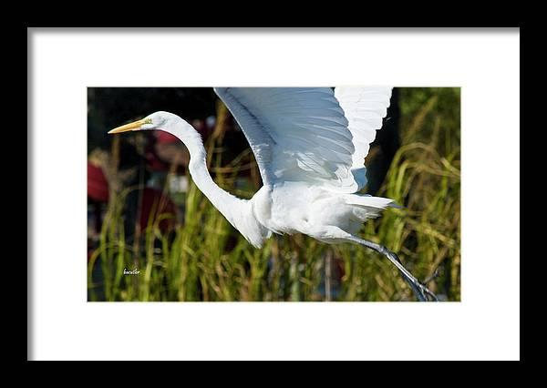Wildlife Framed Print featuring the photograph Flight by Betsy Knapp