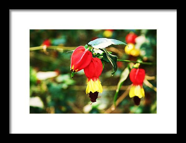 Flowering Plant Framed Print featuring the photograph Flowering Plant by Michael C Crane