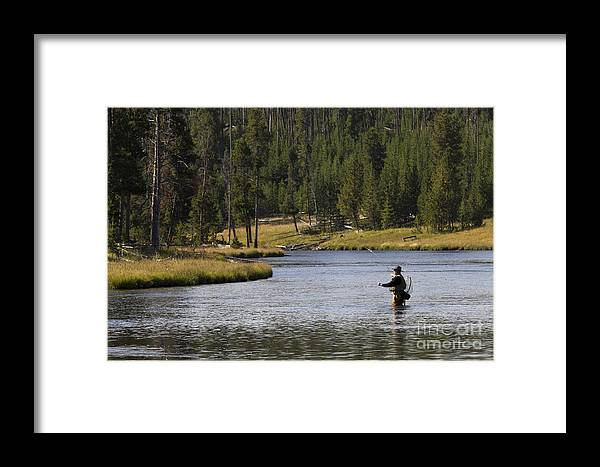 Fly Fishing Framed Print featuring the photograph Fly Fishing In The Firehole River Yellowstone by Dustin K Ryan