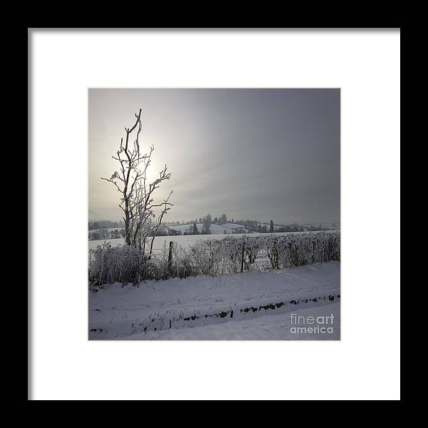 Winter Framed Print featuring the photograph Frozen Britain by Angel Ciesniarska