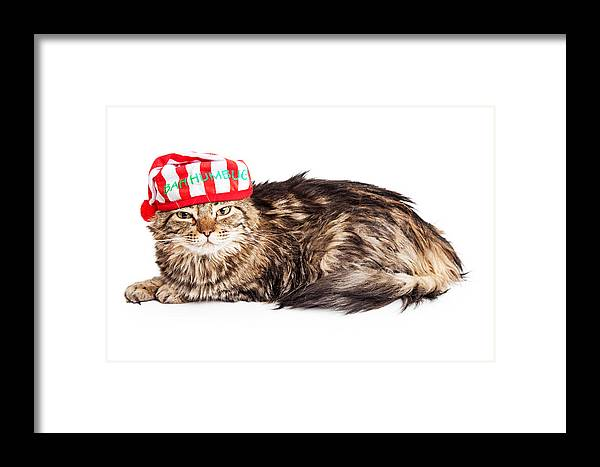 Alone Framed Print featuring the photograph Funny Grumpy Christmas Cat by Susan Schmitz