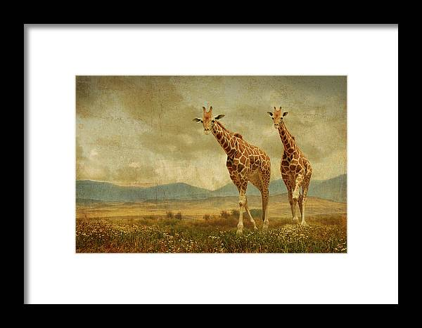Giraffes Framed Print featuring the photograph Giraffes In The Meadow by Guy Crittenden