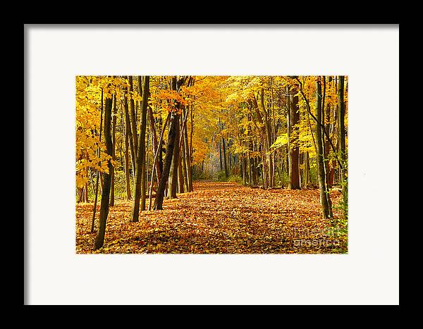 Foliage Framed Print featuring the photograph Golden Days by Neil Doren