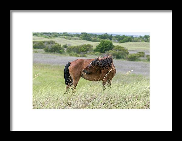 Cindy Archbell Framed Print featuring the photograph Gotta Scratch by Cindy Archbell