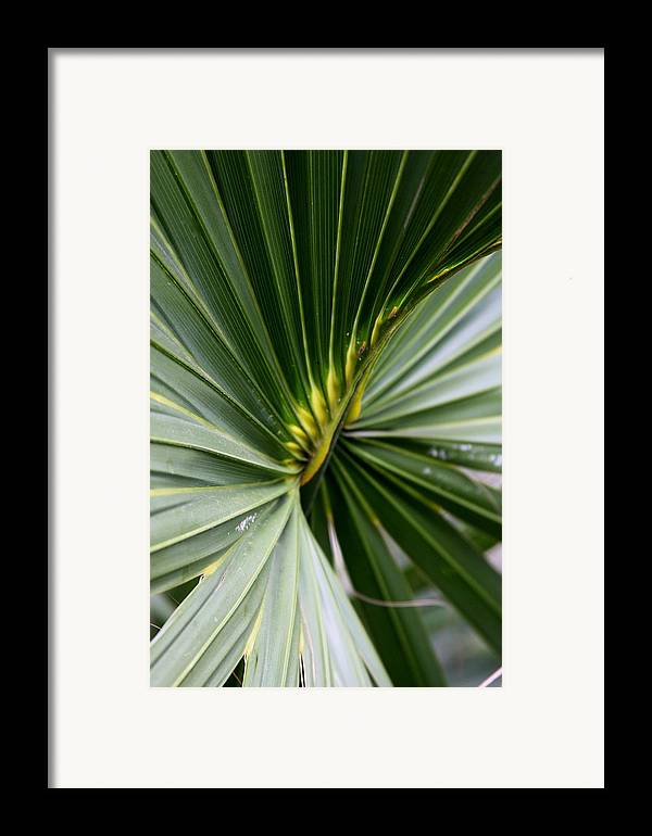 Fern Framed Print featuring the photograph Green Fan by Kenna Westerman