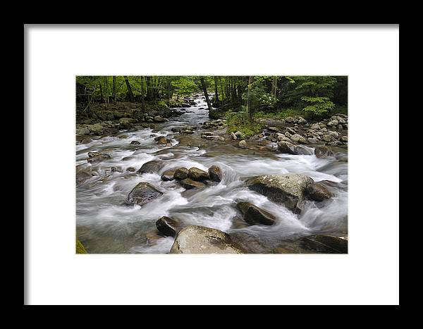 Little Pigeon River Framed Print featuring the photograph Greenbrier In The Great Smoky Mountains by Darrell Young