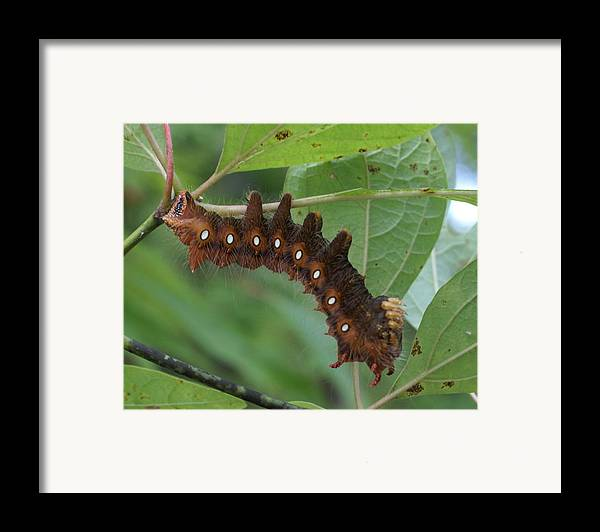 Moth Framed Print featuring the painting Hanging In There by Debbie May