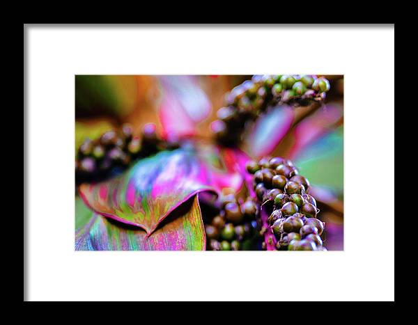 Tropical Framed Print featuring the photograph Hawaii Plants And Flowers by D Davila