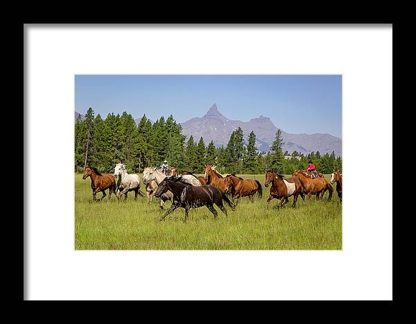 Horses Framed Print featuring the photograph Head Em Up Move Em Out by Jack Bell
