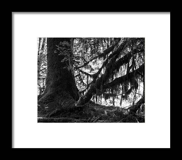 Nature Framed Print featuring the photograph Hoh Rain Forest by Sonja Anderson