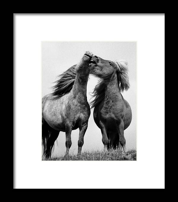 Framed Print featuring the photograph Horses 6 by Stephen Harris