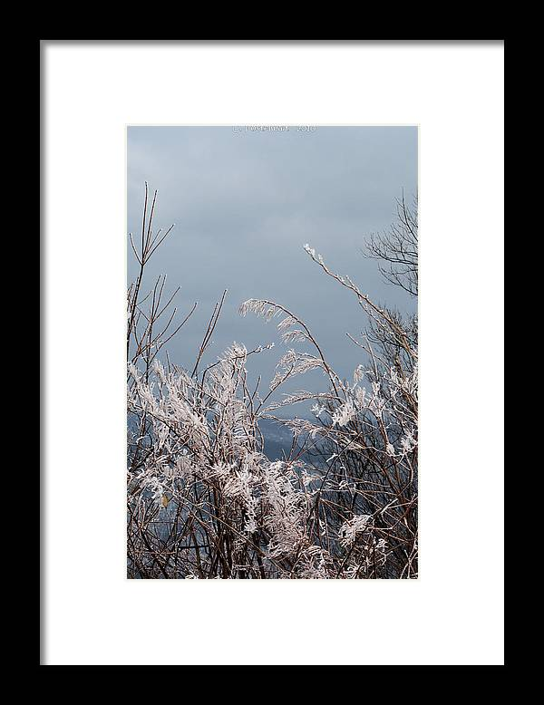 Ice Framed Print featuring the photograph Ice Crystals by Carolyn Postelwait