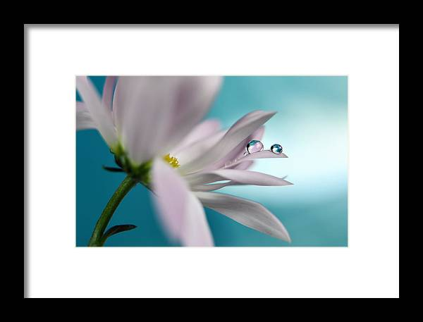 Flower Framed Print featuring the photograph In Turquoise Company by Heidi Westum