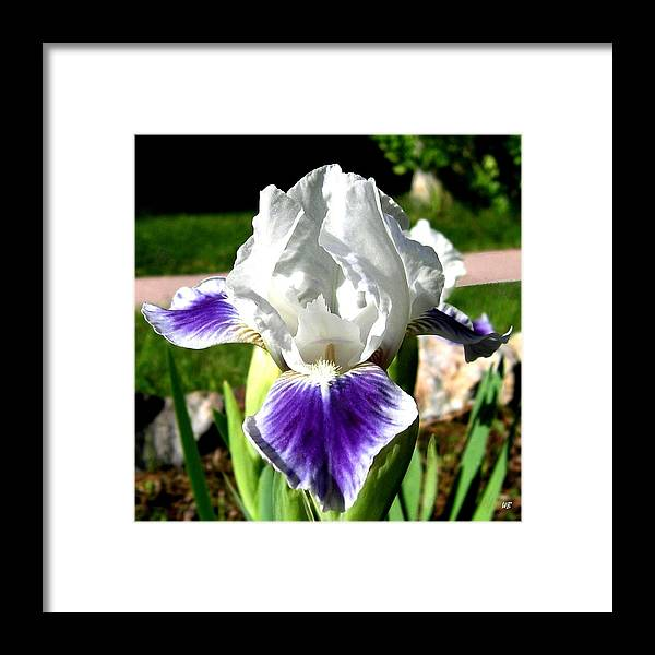 Iris Framed Print featuring the photograph Iris Elegance by Will Borden