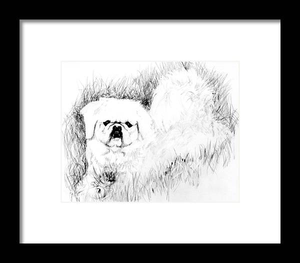 Framed Print featuring the drawing Jasper by Carliss Mora