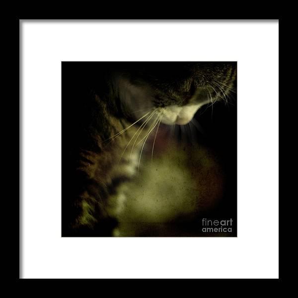 Sleep Framed Print featuring the photograph Just Sleep by Angel Ciesniarska