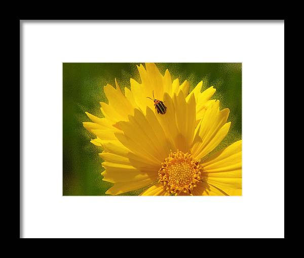 Floral Framed Print featuring the photograph Lady Bug Lookout by Paul Anderson
