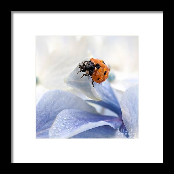 Ladybug Framed Print featuring the photograph Ladybug by Nailia Schwarz