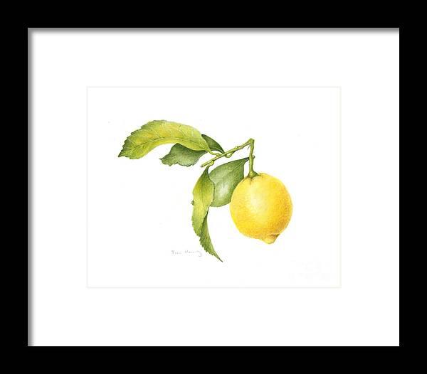 Lemon Framed Print featuring the painting Lemon by Fran Henig