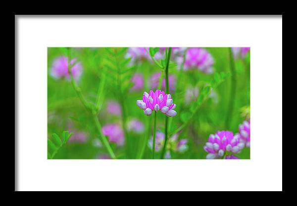 Magenta Wildflowers Framed Print featuring the photograph Magenta Wildflower by Alex Zabo