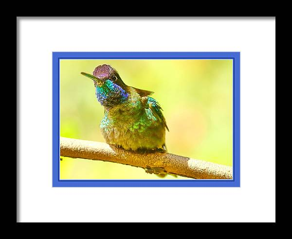 Hummingbird Framed Print featuring the photograph Magnificent by BYETPhotography