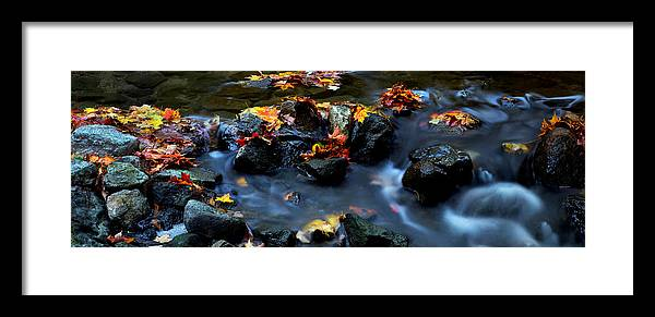 Landscape Framed Print featuring the photograph Maple Leaves-0002 by Sean Shaw