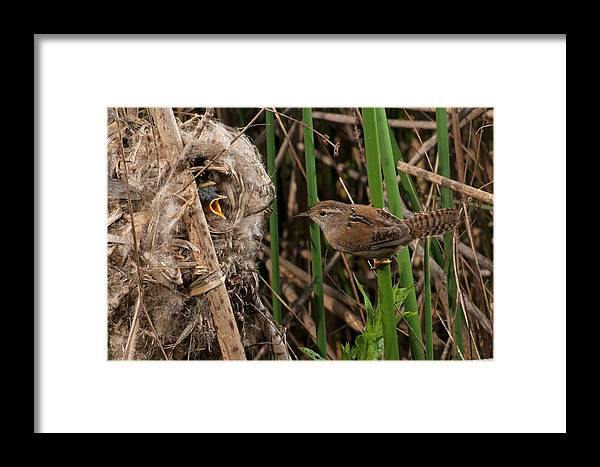Portrait Framed Print featuring the photograph Marshy Visit by Damon Calderwood