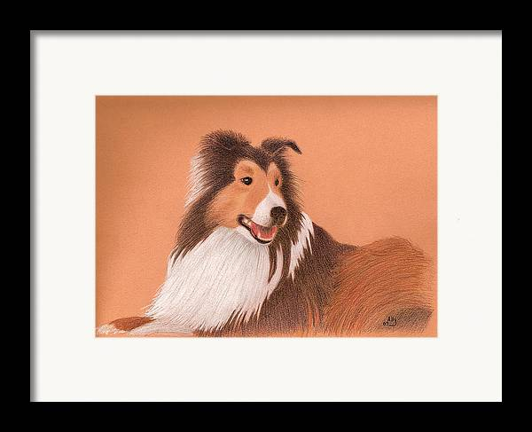 Sheltie Framed Print featuring the drawing Morgan by Ally Benbrook