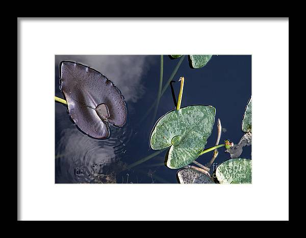 Morikami Gardens Framed Print featuring the photograph Morikami Gardens by Richard Smukler