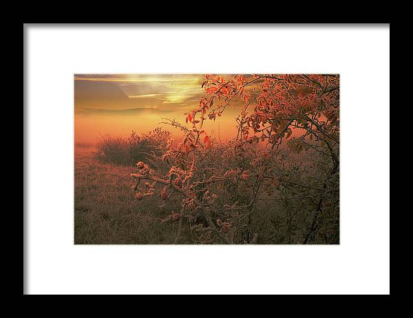 Morning Framed Print featuring the photograph Morning Frost by Alex Lim