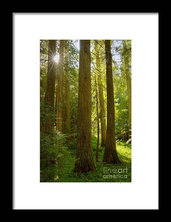 Clearwater National Forest Framed Print featuring the photograph Morning In Devoto by Idaho Scenic Images Linda Lantzy