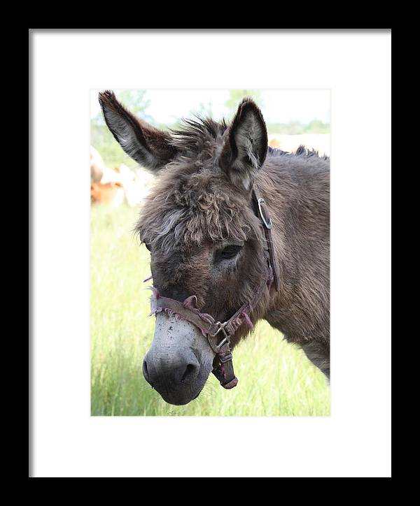 Donkey Framed Print featuring the photograph Mr. Handsome by Pat Purdy