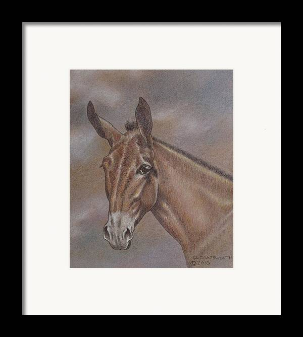 Framed Print featuring the pastel Mule Head by Dorothy Coatsworth