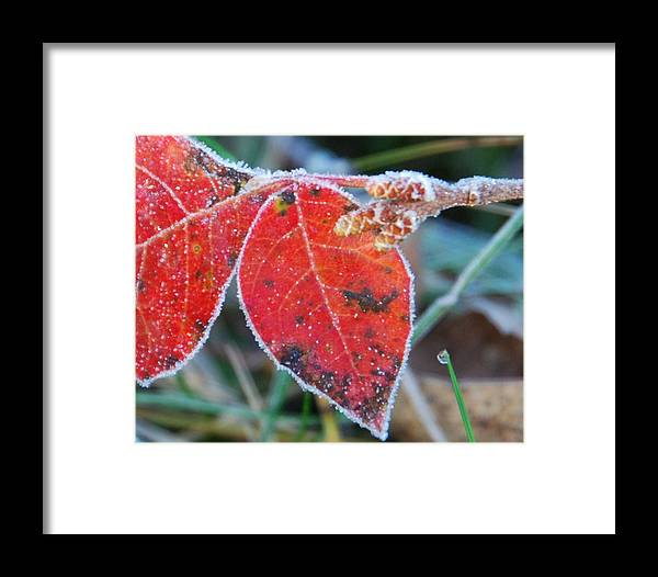 Red Leaves Framed Print featuring the photograph Nature by Becky Hollis