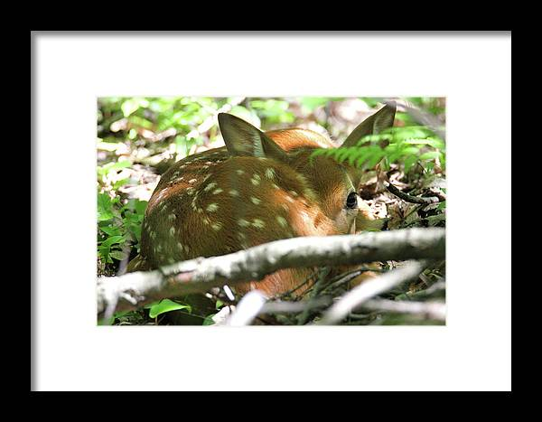 Whitetail Framed Print featuring the photograph Nestled In by Brook Burling