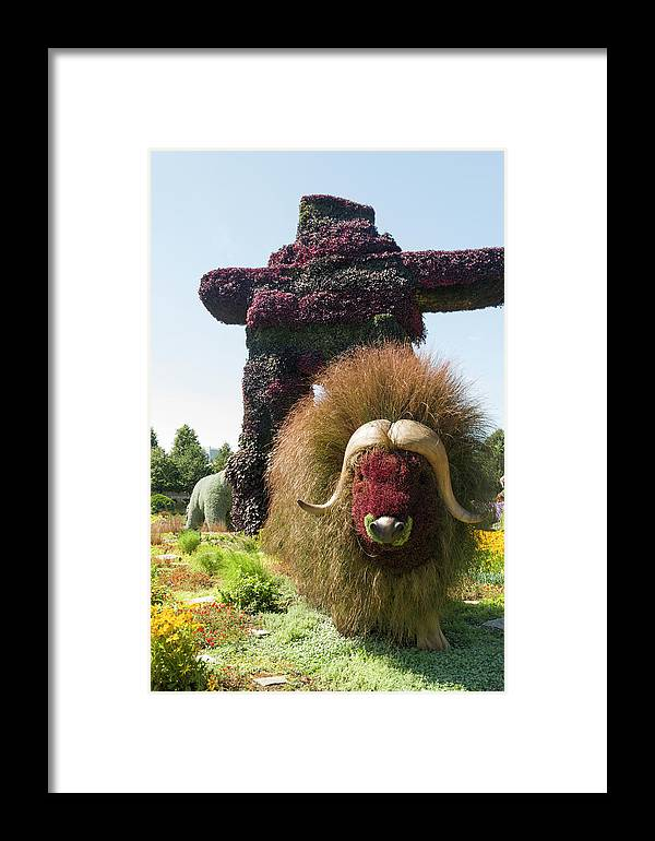 150 Framed Print featuring the photograph Northwest Territories Entry Is The Muskoxen by Bob Corson