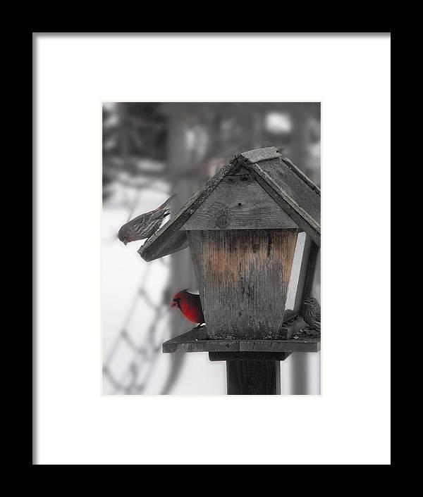 Birds Framed Print featuring the photograph Nosy Neighbour by Anna Zabel