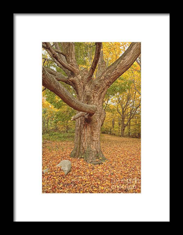 Fall Framed Print featuring the photograph Odiorne Point State Park - Rye New Hampshire by Erin Paul Donovan