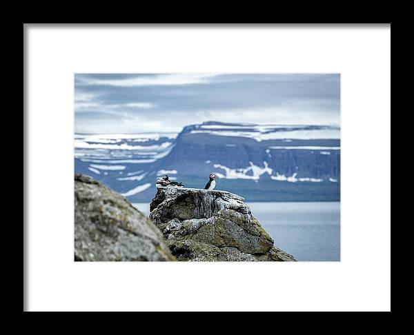 Iceland Framed Print featuring the photograph On Watch... by Valeriy Shvetsov