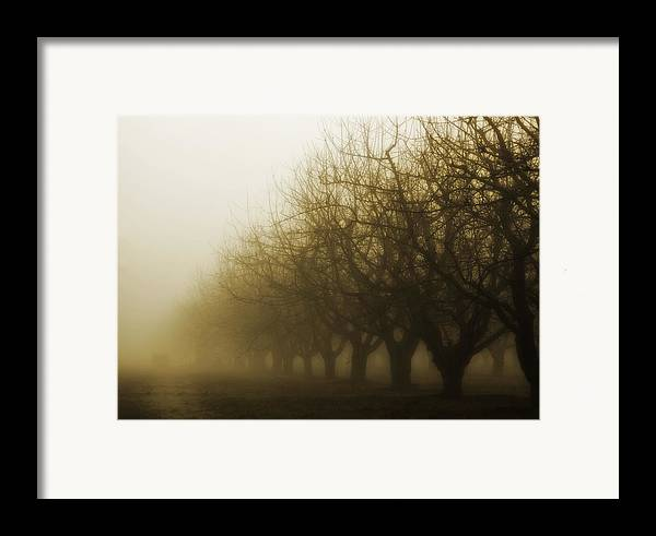 Sepia Framed Print featuring the photograph Orchard In Fog by Rebecca Cozart