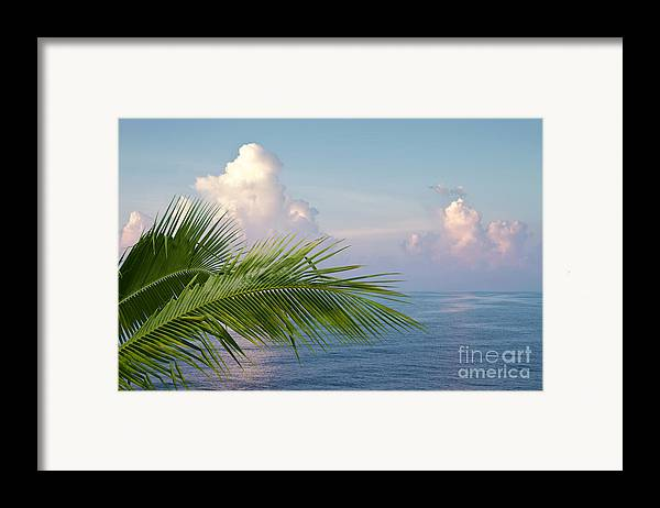 Palm Framed Print featuring the photograph Palm And Ocean by Blink Images