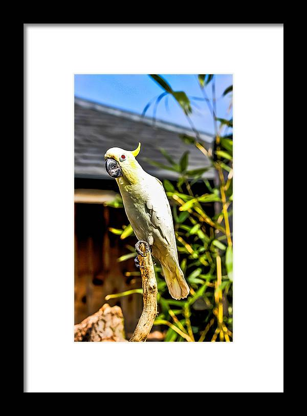 Parrot Framed Print featuring the photograph Parrot by Angela Aird