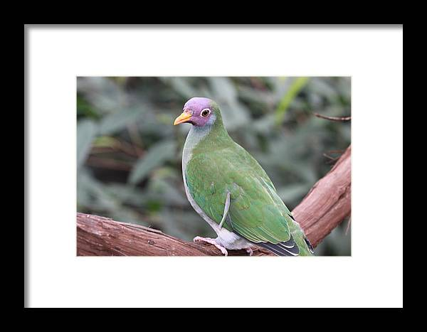 Bird Framed Print featuring the photograph Peaceful Forest by Paul Slebodnick
