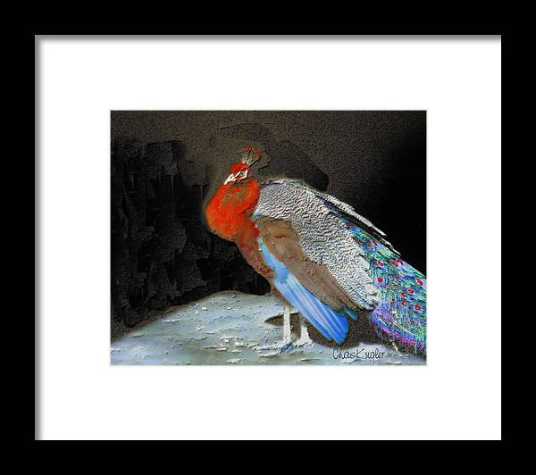 Bird Framed Print featuring the painting Peacock II by Chuck Kugler