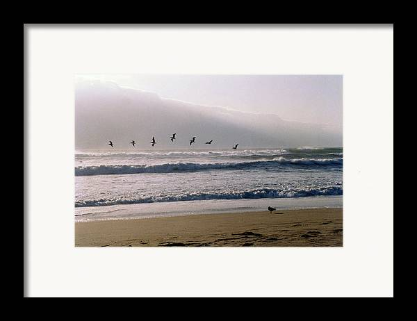 Seascape Framed Print featuring the photograph Pelican Brief by Brande Barrett