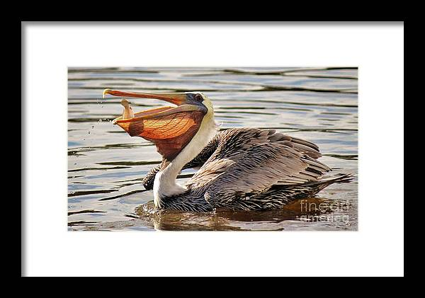 Pelican Framed Print featuring the photograph Pelican Catching A Fish by Paulette Thomas