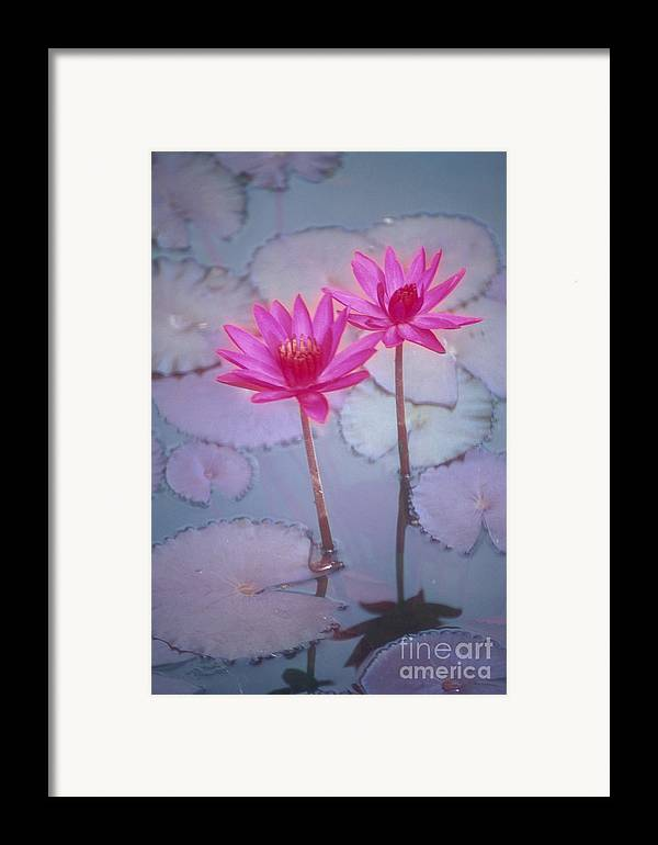 Anther Framed Print featuring the photograph Pink Lily Blossom by Ron Dahlquist - Printscapes