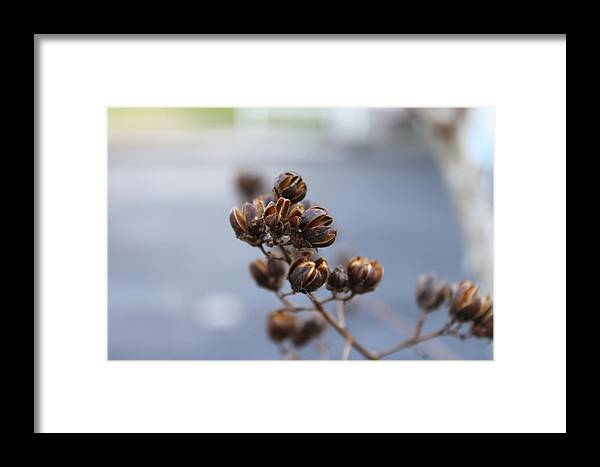 Seed Pods Framed Print featuring the photograph Pods by Evelyn Patrick