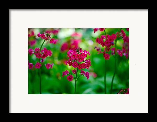 Floral Framed Print featuring the photograph Purple Flowers by Paul Kloschinsky